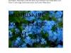 apie-filmA-Oskar-VolAak-8c-page0001